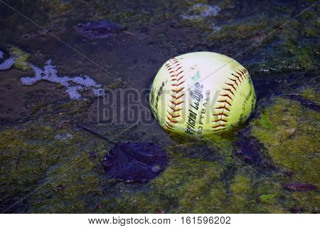 JOLIET, ILLINOIS / UNITED STATES - MAY 18, 2016: An Official League Softball floats among the algae in a small lake in Joliet, Illinois during May.