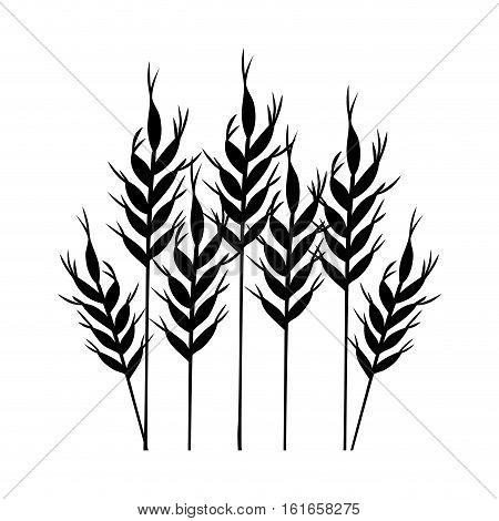 Wheat ear icon. Food grain agriculture and natural theme. Isolated design. Vector illustration
