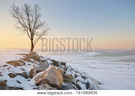 Tree and winter landscape. Composition of nature.