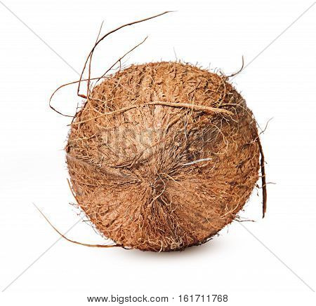 Coconut lying on the side of top isolated on white background
