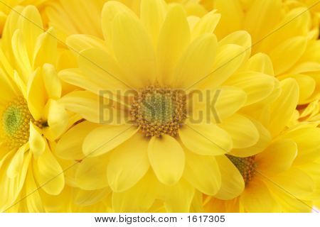 Beautiful Yellow Flowers On The White Background