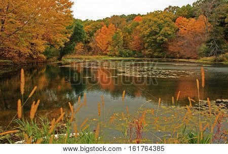 photograph of a pond with fall trees