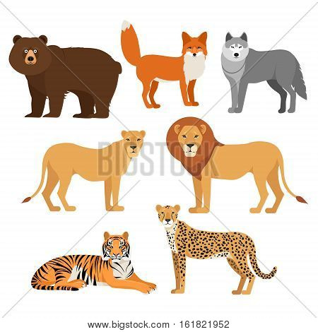Predatory animals set wolf bear fox tiger lion cheetah isolated on white