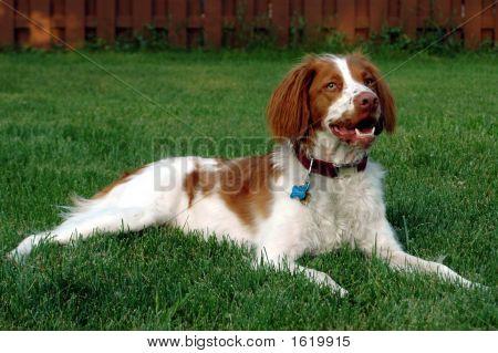 Jagger In Grass1