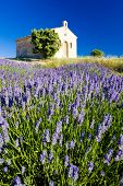 image of lavender field  - chapel with lavender field - JPG