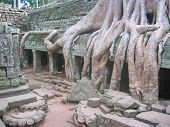 picture of mahabharata  - A banyan tree over old ruin temple  - JPG