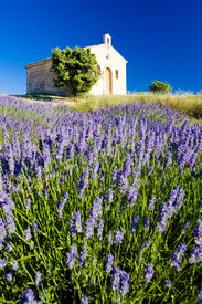 picture of lavender field  - chapel with lavender field - JPG