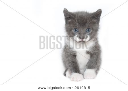 Kitten On White