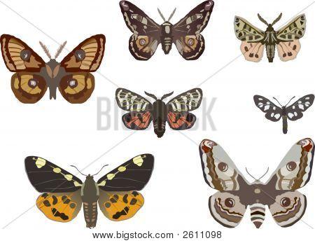 Seven Butterflies