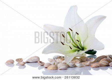 spa flower  towel sea shell on white