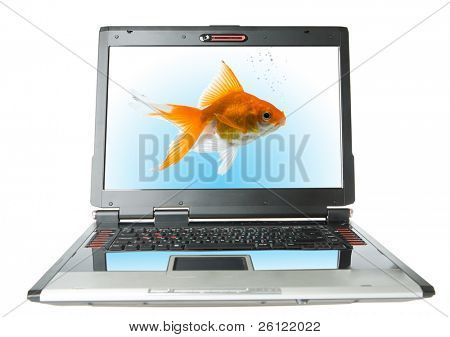 laptop with gold fish isolated over white background