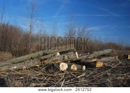 Exploitation Of Wood