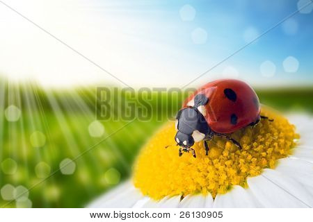 flower and nature spring bokeh background with sun beam
