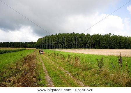 A group of hikers walking on a unpaved road, next to a wheat field, in the Ardennes mountains, Belgium