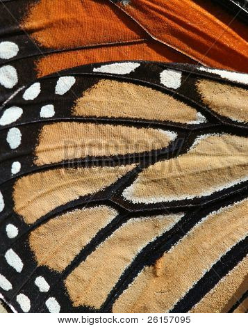 Macro of a Monarch Butterfly for background or texture