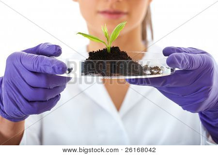 young lab assistant holds small flat dish with soil and plant, wears violet gloves, isolated on white