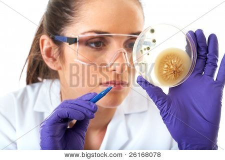young attractive laboratory assistant check petri dish with agar and bacterium on it, isolated on white