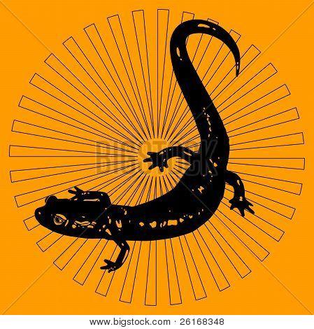 Black Salamander