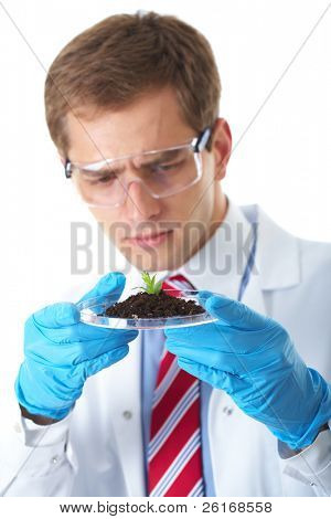 young lab assistant holds small flat dish with soil and plant, wears blue protection gloves,  isolated on white