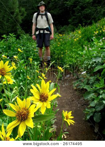 One person walking along trail with flowers and trees