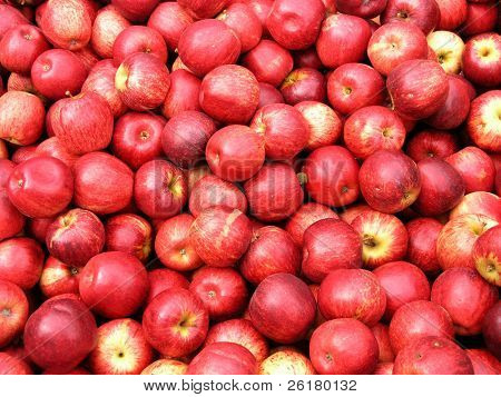 Second Grade Apples
