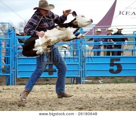 A cowboy throws a calf after roping it