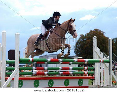 Roan Show Jumper