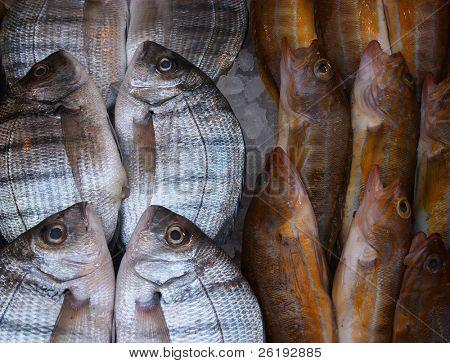Pescar en la losa de un pescadero en Grecia.