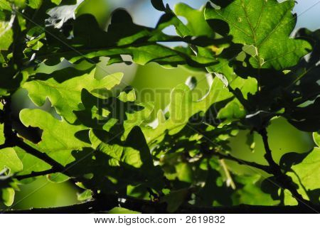 Green Leaves Flying About Wind