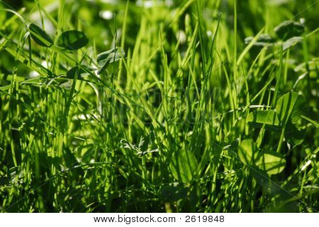 A Lush Grass In The Sunlight