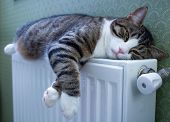 Furry Striped Cat Lies On Warm Radiator Resting And Relaxing poster