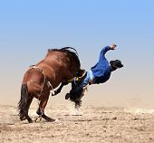 stock photo of bronco  - Loose Girth Causing a Cowboy to Fall isolated with clipping path - JPG