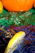 image of crown green bowls  - Splash with fresh lemon - JPG