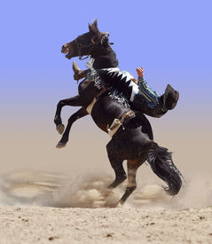 picture of bucking bronco  - Bucking Rodeo Horse isolated with clipping path - JPG