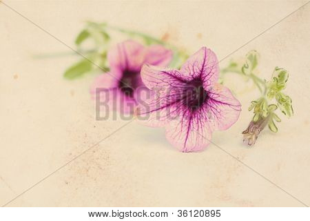 Pretty Floral Vintage Background With Surfinia Flowers