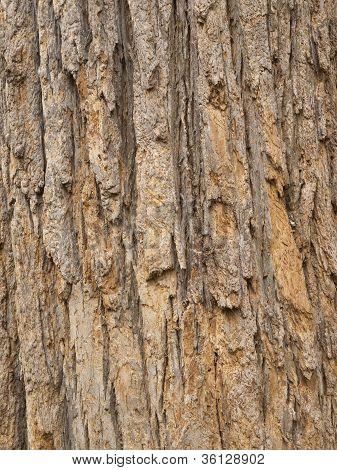 Red Tree Bark, close up