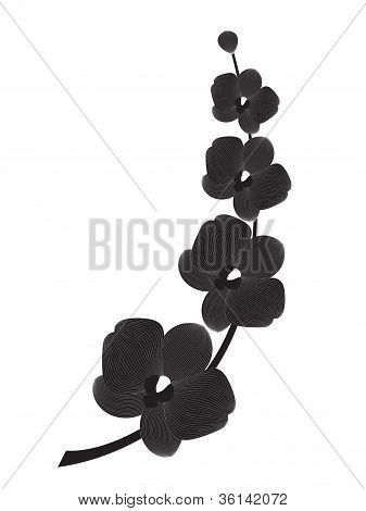 Orchid branch silhouette,