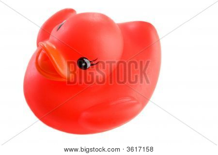 Red Plastic Duck