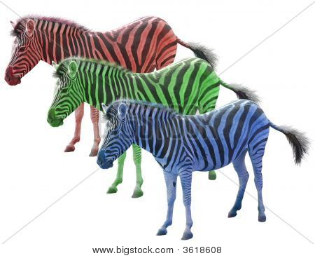 Three Colored African Zebras Red Blue Ang Green Isolated Over White Background