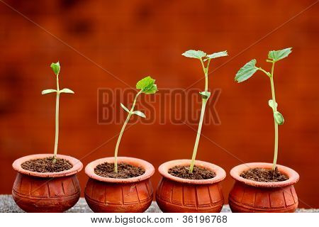 Baby Plants Growing From Soil