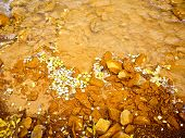 image of colorado high country  - Aspen leaves float in muddy mountain stream in Fall in Colorado - JPG