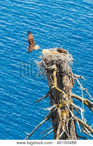 Osprey Flies Away From Nest Leaving Partner