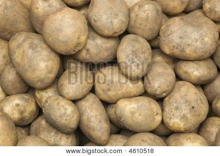 Lots Of Fresh Potatos