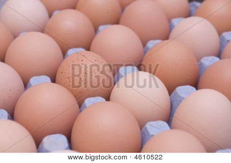 And One Spotted egg