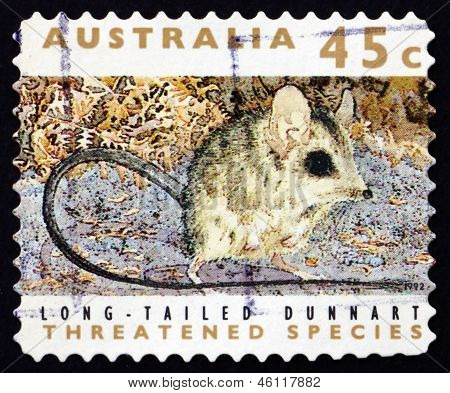 Postage Stamp Australia 1992 Long-tailed Dunnart, Marsupial Mamm