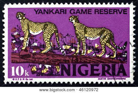 Postage Stamp Nigeria 1973 African Leopards