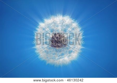 Dandelion Blowball Rays On Blue