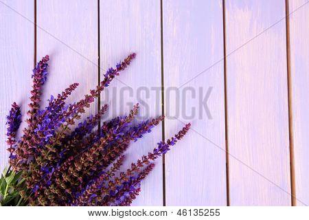 Salvia flowers on purple wooden background