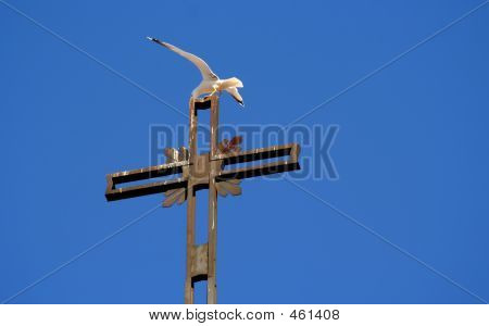 Seagull Taking Off From A Cross