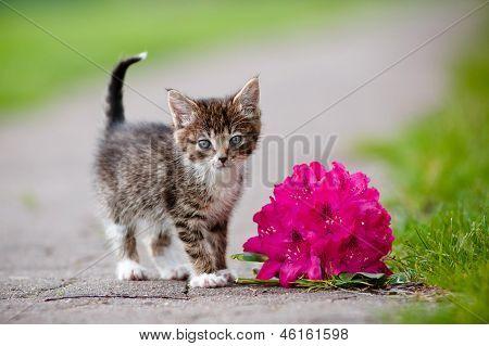 adorable little tabby kitten